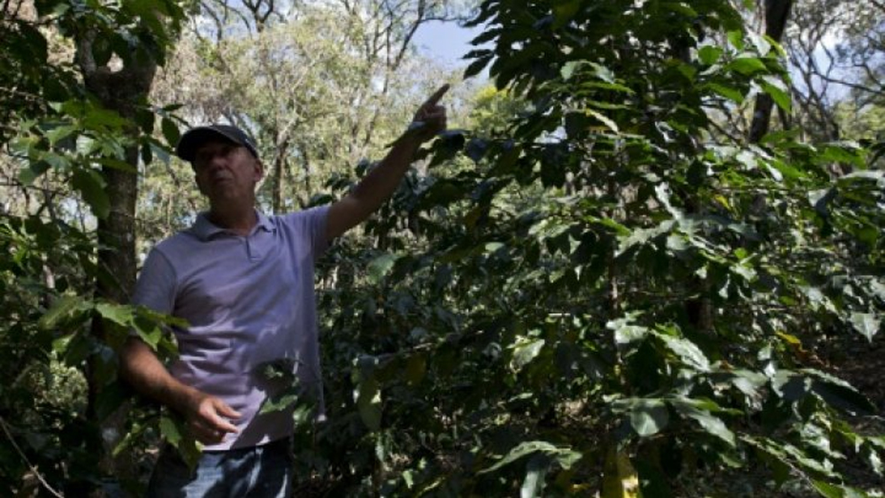 Brazilian farmer Marcos Croce has woken up and smelled the coffee -- embracing the organic trend and bucking Brazil's long-held status as a mass producer of poor quality beans.